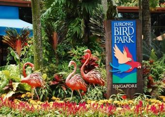 Парк Птиц Jurong Bird Park