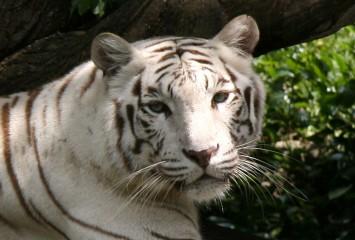 Экскурсия в зоопрак Сингапура