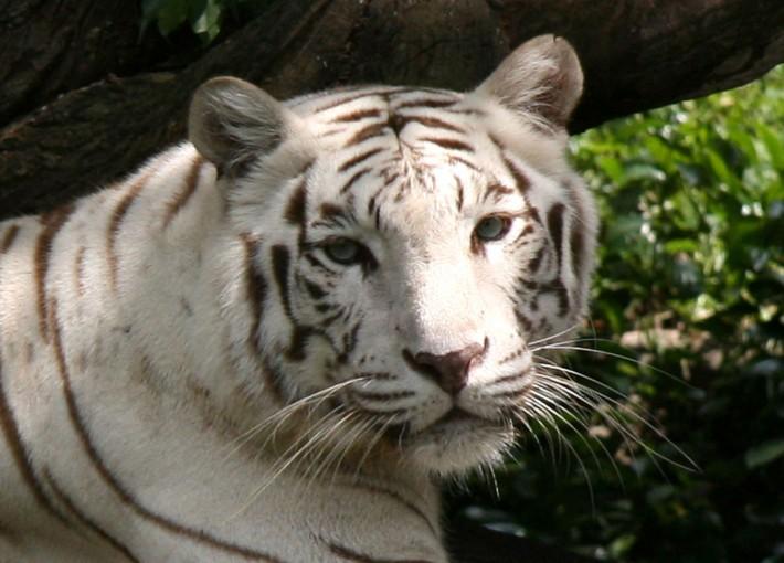Экскурсия в зоопарк Сингапура
